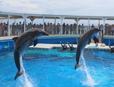 dolphin_show_stacker