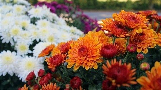 fall-plant-sale-scheduled-for-nov.-2