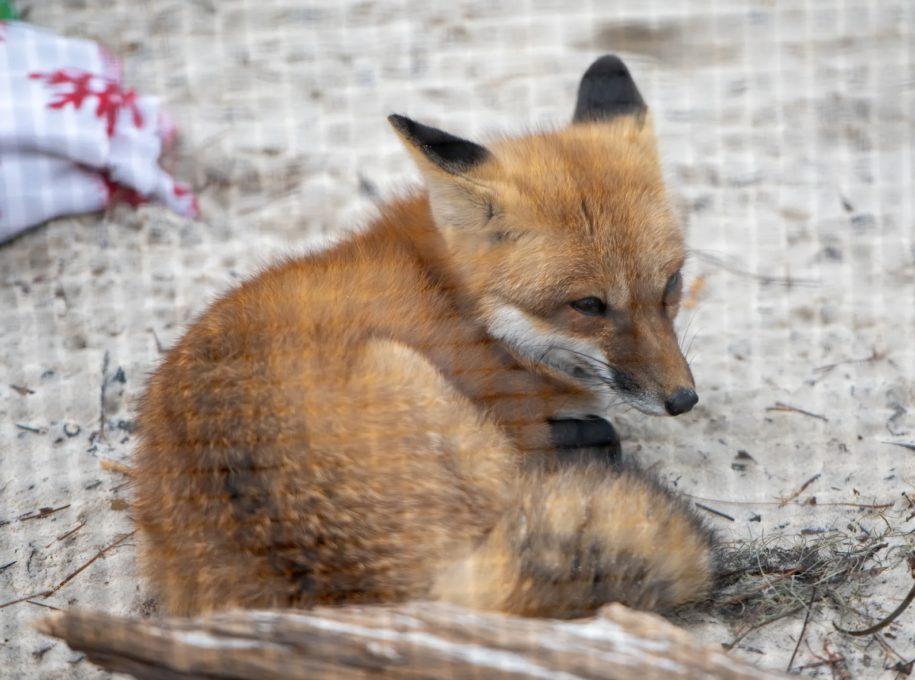 florida-wildlife:-squirrels,-opossums-and-skunks,-baby-season-gets-underway