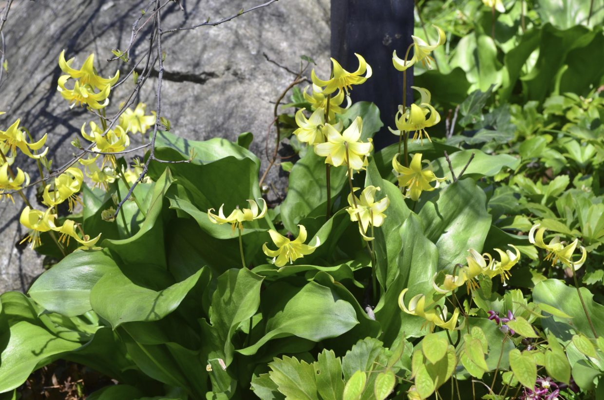 montgomery-column:-little-plants-that-add-a-special-touch-to-a-garden