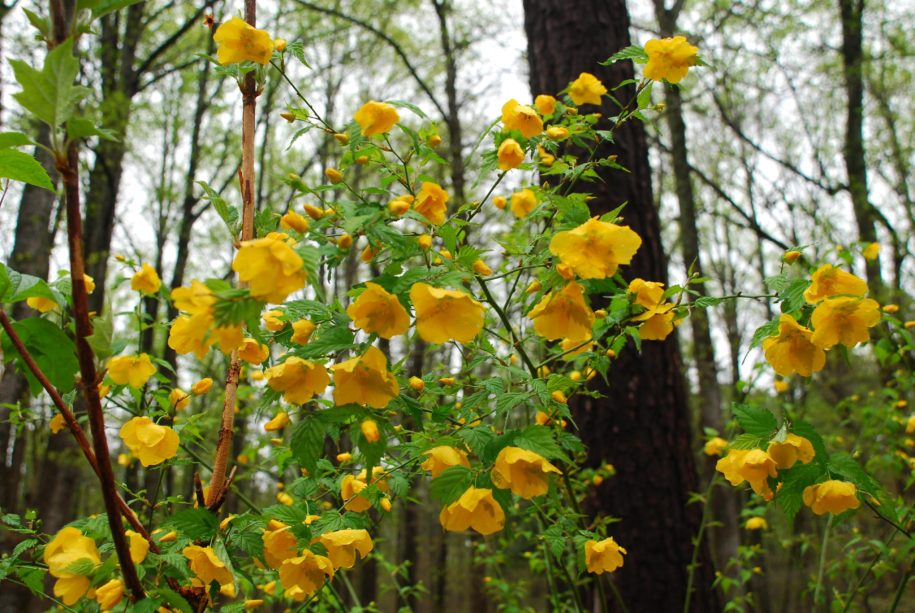 riot-of-color:-flowering-shrubs-can-wake-up-spring-gardens