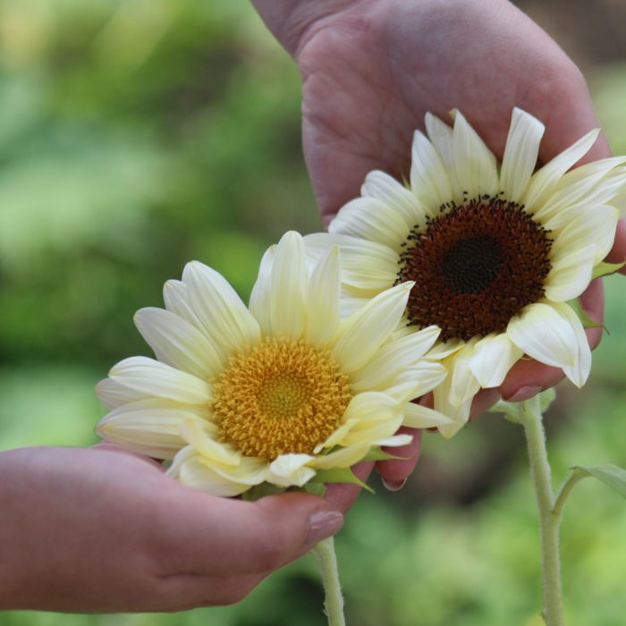 in-the-garden-column:-now-is-the-time-to-cultivate-something-good