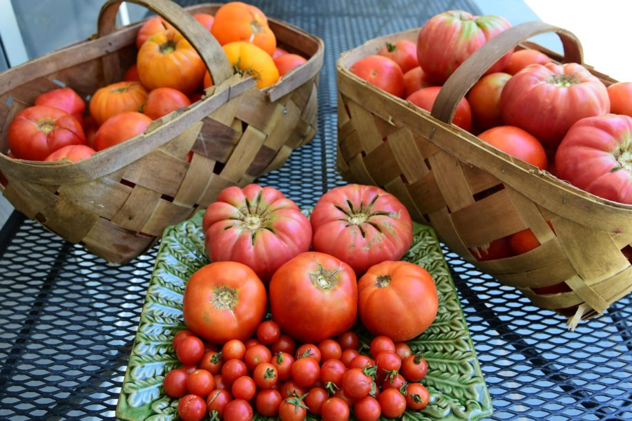 vine-ripe-goodness:-get-hooked-on-planting-tomatoes