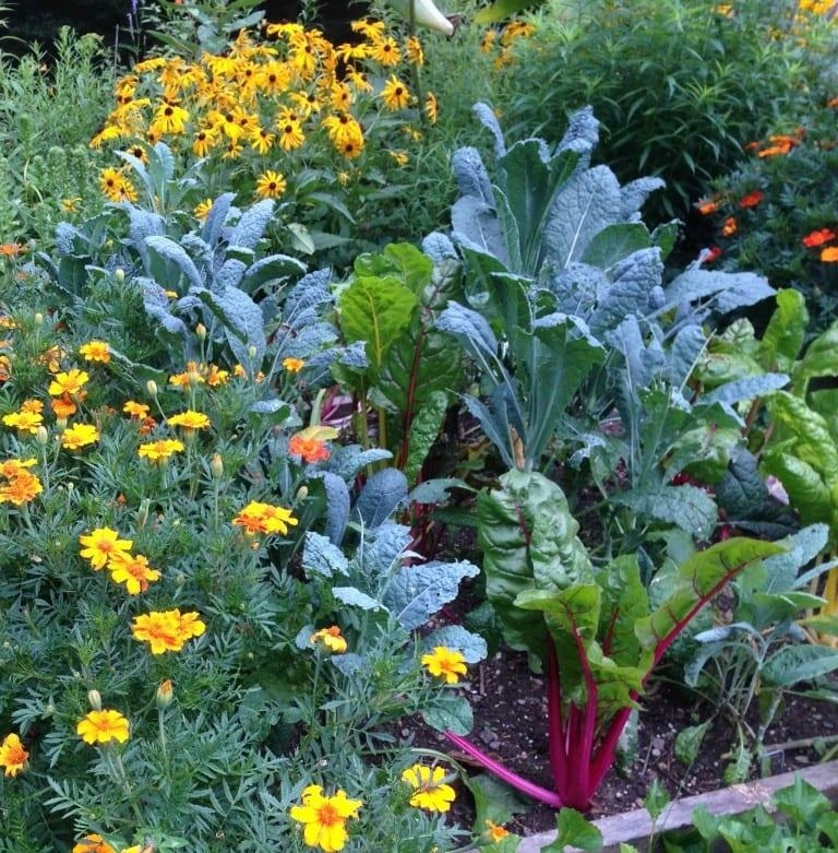 happily-growing-together:-incorporate-edible-landscaping-into-your-garden