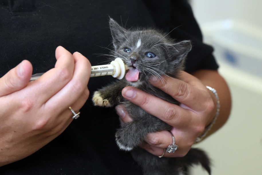 paws:-best-to-keep-baby-kittens-with-their-mothers