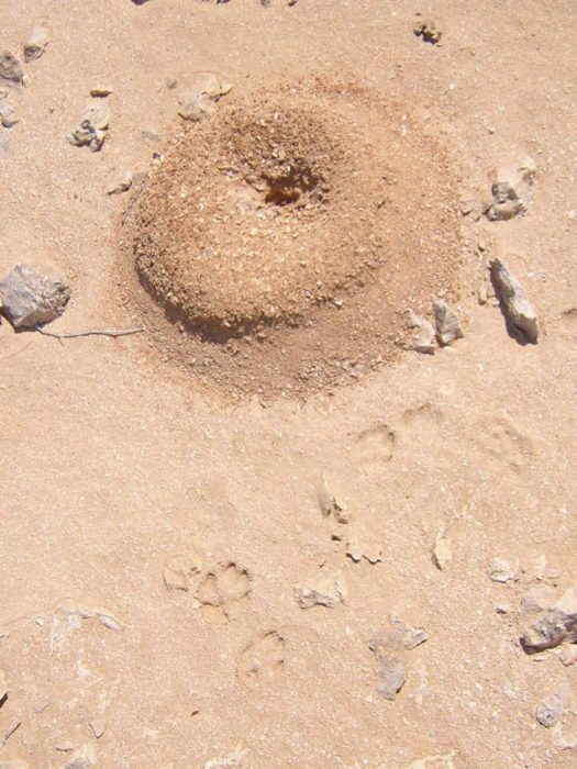 anthill-removal-i-found-easy-and-effective