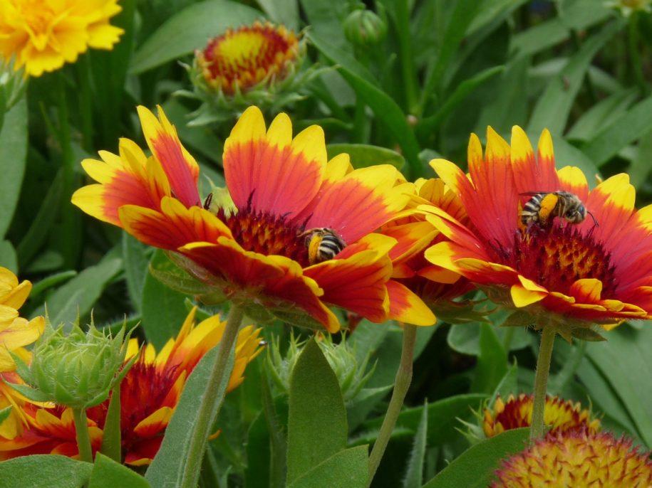 gardening-tips-–-weathering-extreme-weather