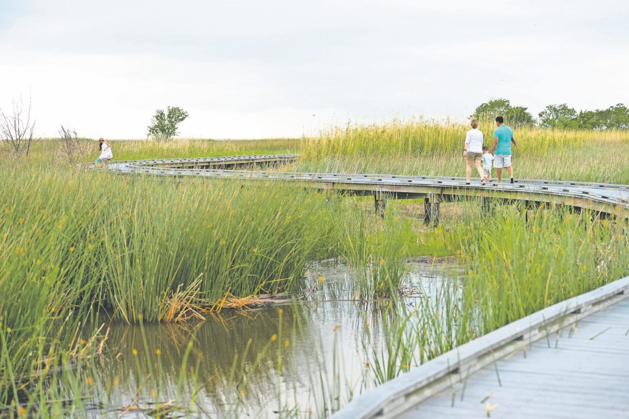 oh-my!:-gators,-fish,-birds-and-more-await-along-the-creole-nature-trail