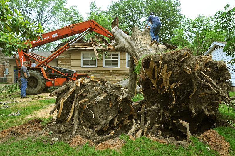 should-you-pay-the-cost-to-remove-a-tree?