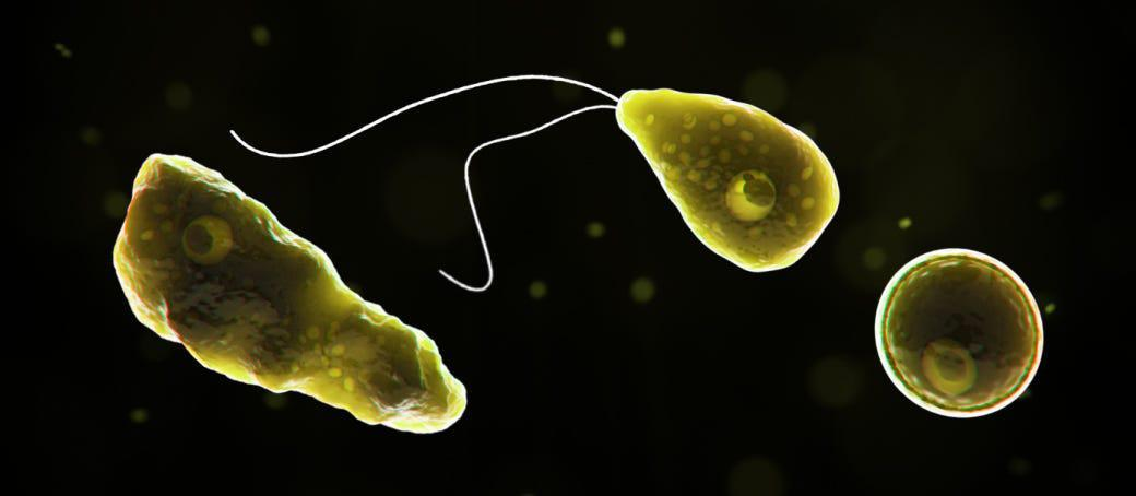 person-infected-by-'brain-eating'-amoeba-in-hillsborough-county-in-florida