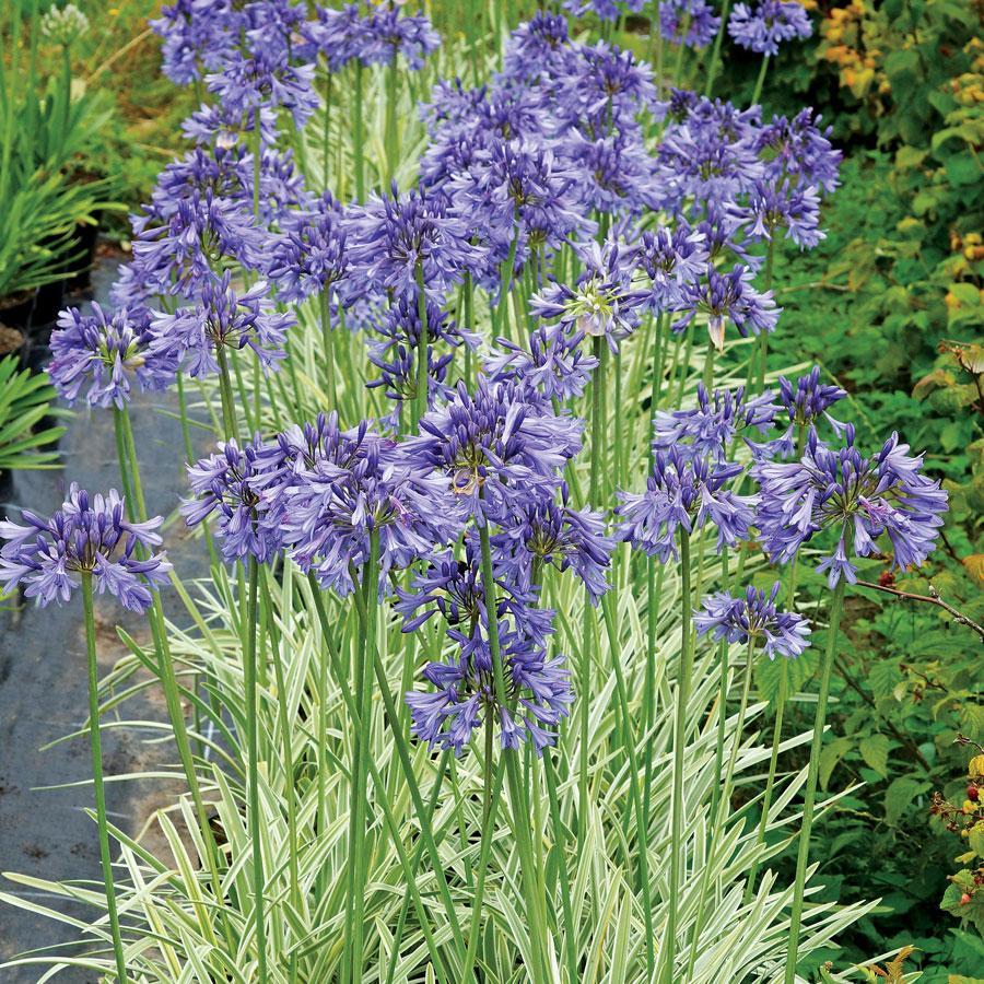 in-the-garden-column:-gardening-for-longevity